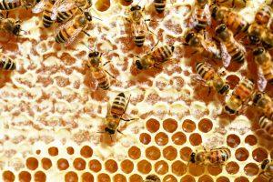 Le miel produit des abeilles