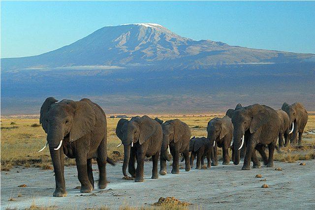 Réaliser un voyage écotouristique au Kenya